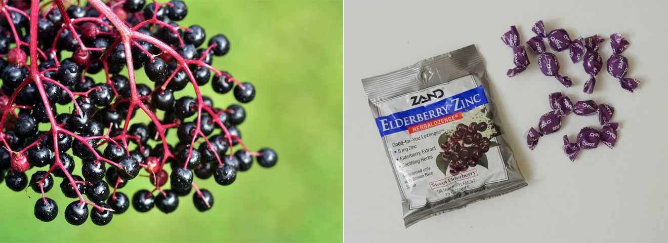 Бузина с Айхерба: чёрный сироп для сезона простуд