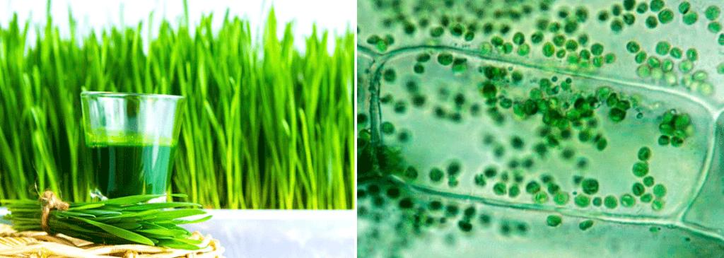 Лучший хлорофилл на Айхерб: зеленый эликсир вечной молодости