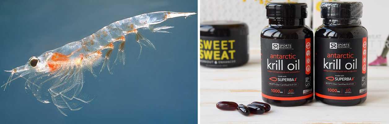 10 лучших препаратов из масла криля, которые можно заказать на iHerb